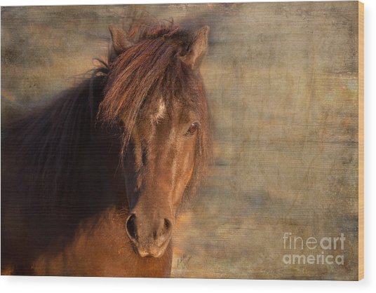 Shetland Pony At Sunset Wood Print