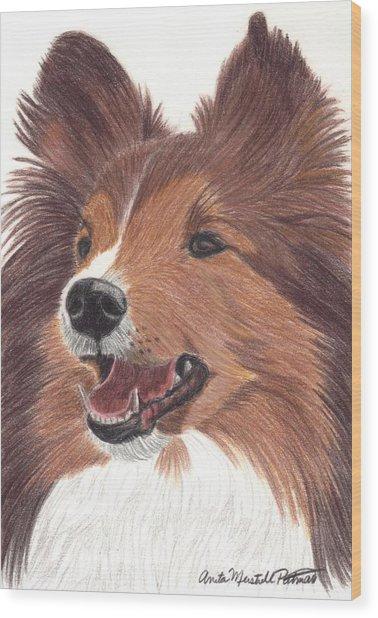 Shetland Sheepdog Vignette Wood Print by Anita Putman