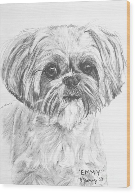 Shih Tzu Portrait In Charcoal Wood Print