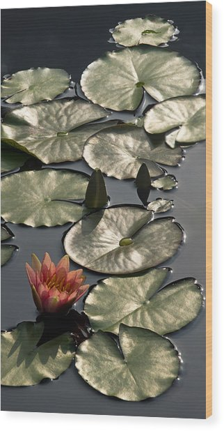 Shimmering Lily Pads Wood Print