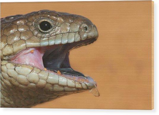Shingle Back Lizard Wood Print