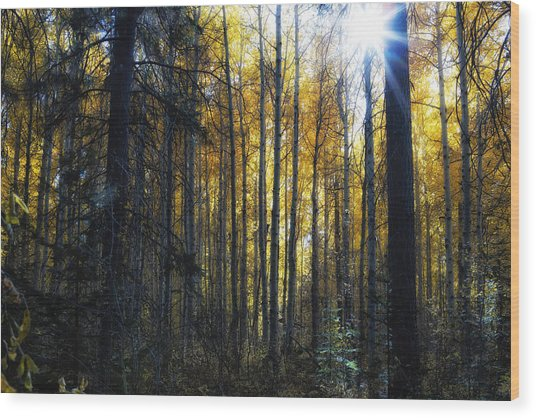 Shining Through Wood Print
