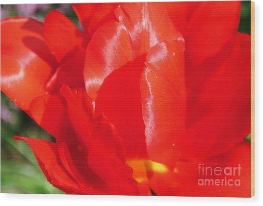 Shining Tulip Wood Print