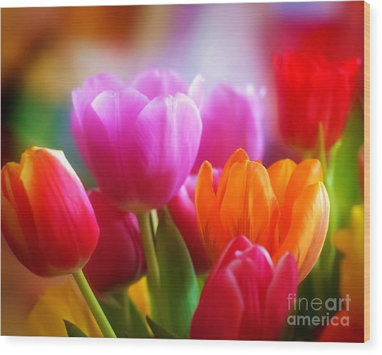 Shining Tulips Wood Print