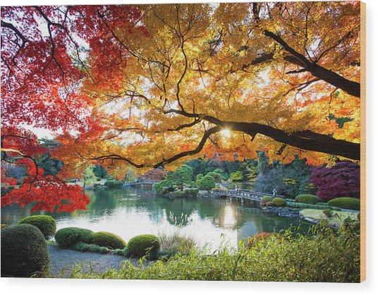 Shinjuku Gyoen National Garden In Wood Print