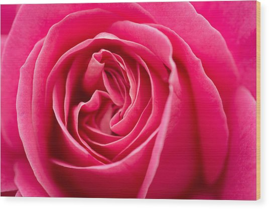 Shocking Pink Rose Wood Print