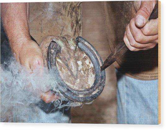 Shoeing A Horse Wood Print