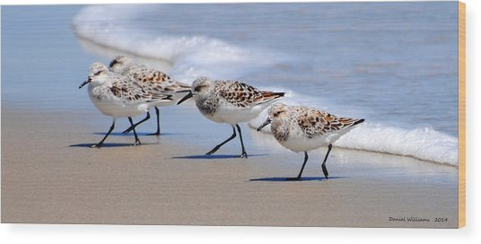 Shorebird Quartet Wood Print