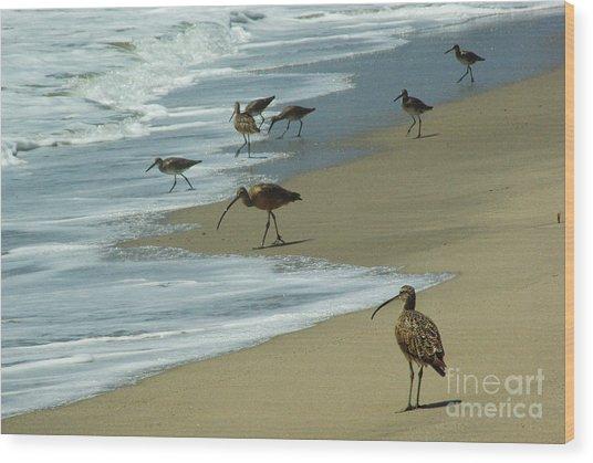 Shorebirds 1.4168 Wood Print by Stephen Parker