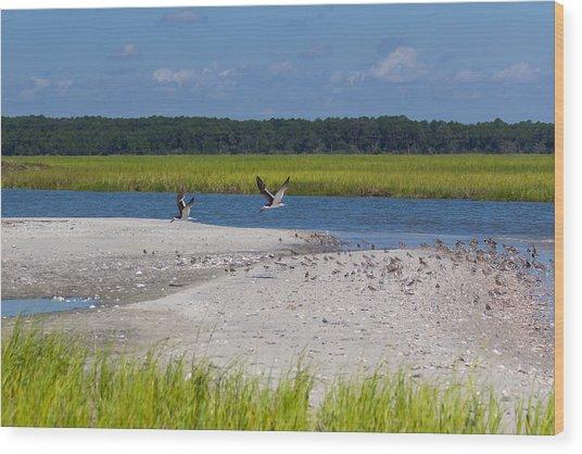 Shorebirds And Marsh Grass Wood Print