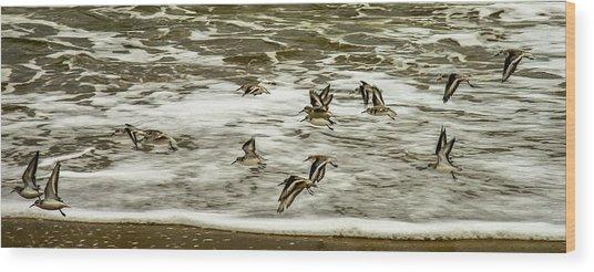Shorebirds At Duck Wood Print