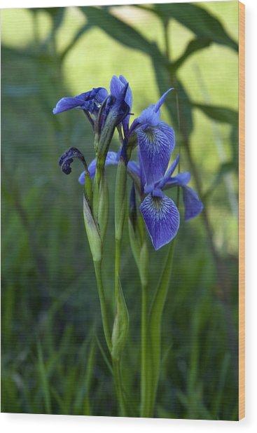 Shoreline Iris Wood Print by Bob Krzmarzick
