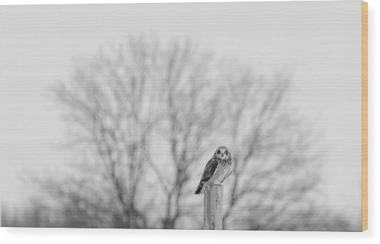 Short-eared Owl In Black And White Wood Print