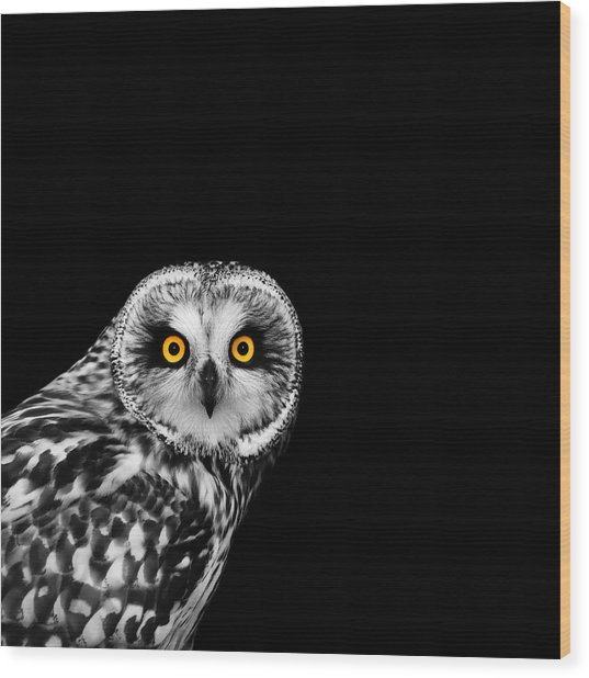 Short-eared Owl Wood Print