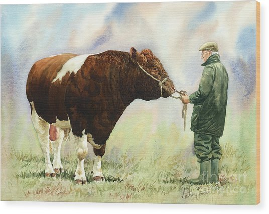 Shorthorn Bull Wood Print by Anthony Forster