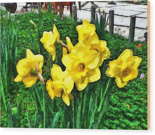 Shy Daffodils  Wood Print