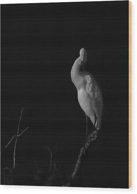 shy Wood Print