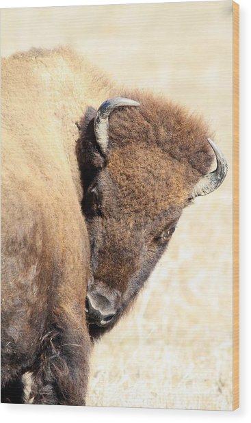 Shy Wood Print by Rick Rauzi