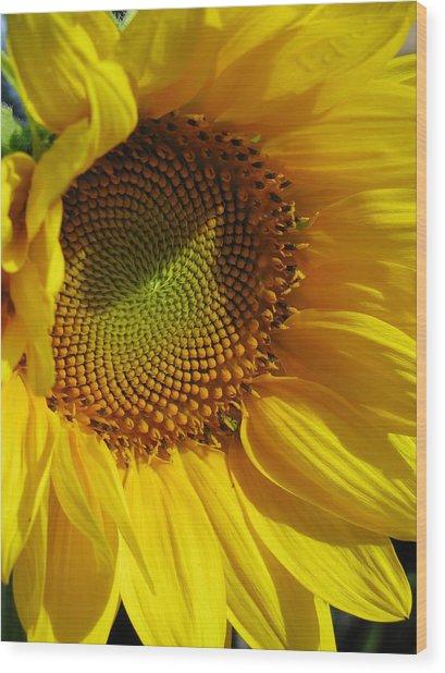 Shy Sunflower Wood Print by Laura Corebello