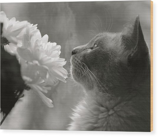 Siamese Cat With Flowers Wood Print