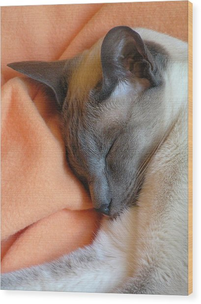 Siamese Snooze 3 Wood Print