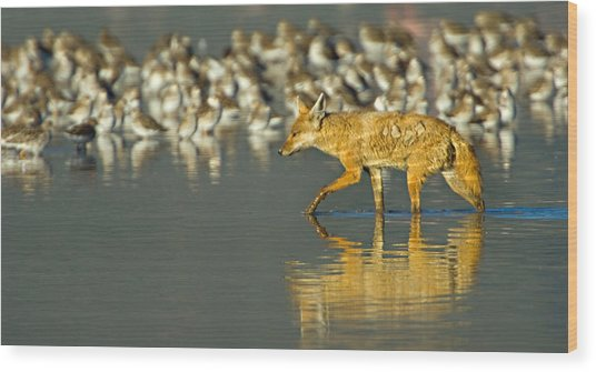 Side Profile Of A Golden Jackal Wading Wood Print