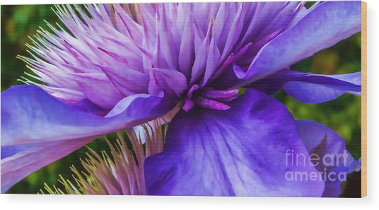 Side View Clematis Wood Print