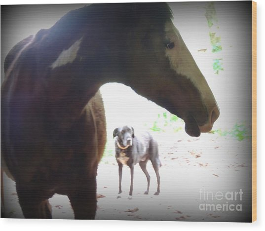 Sierra And Cody In The Mist Wood Print