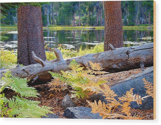 Siesta Lake Wood Print