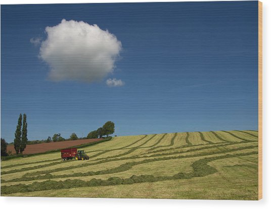 Silage Collection Wood Print