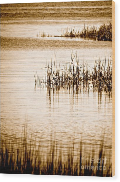 Silence Wood Print by Q's House of Art ArtandFinePhotography
