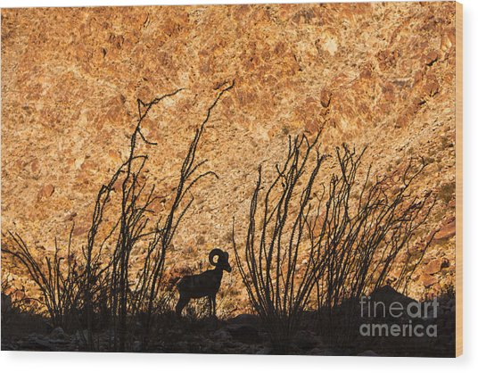 Silhouette Bighorn Sheep Wood Print