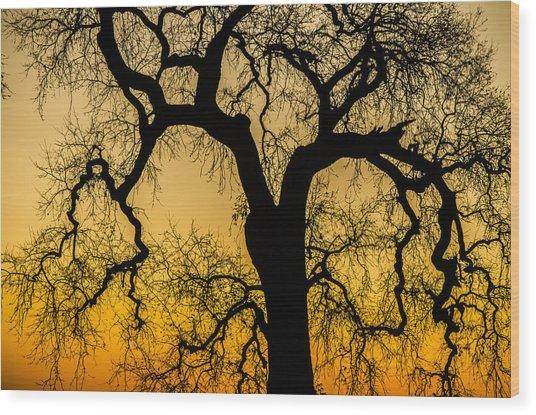 Silhouette Oak Wood Print