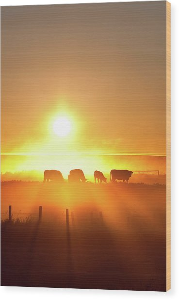 Silhouette Of Cattle Walking Across The Wood Print by Imaginegolf