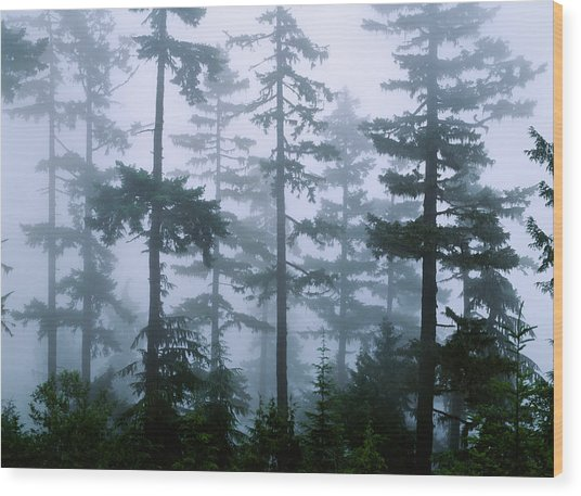 Silhouette Of Trees With Fog Wood Print