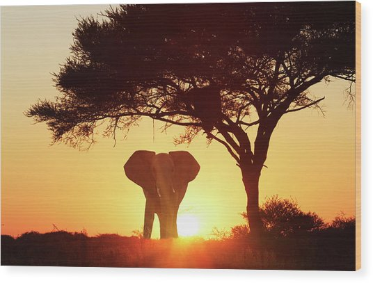 Silhouetted African Elephant At Sunset Wood Print by Lost Horizon Images