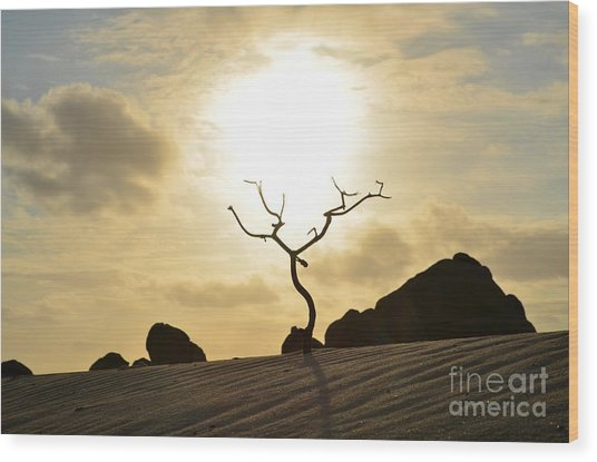 Silhouetted Tree At Dawn In Aruba Wood Print