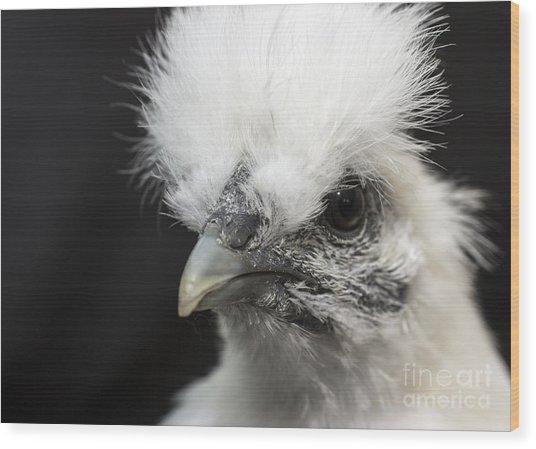 Silkie Chicken Portrait Wood Print