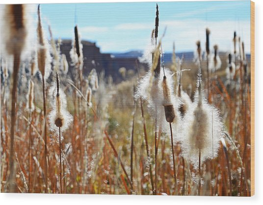 Silky Cat's Tails Wood Print