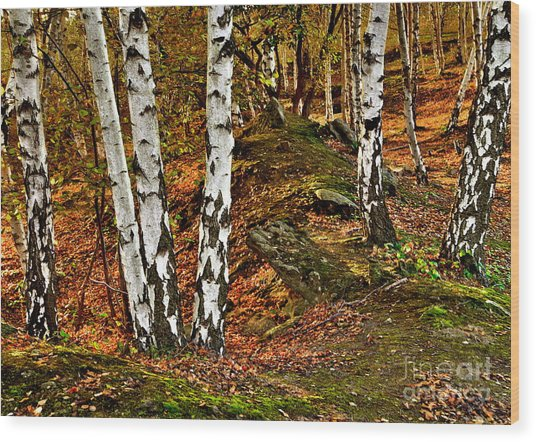 Silver Birch Tree Canvas Wood Print