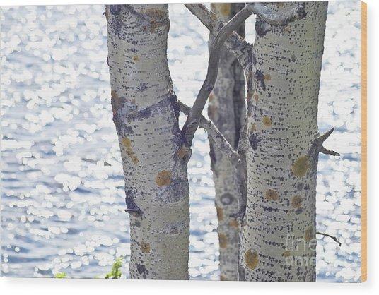 Silver Birch Trees At A Sunny Lake Wood Print