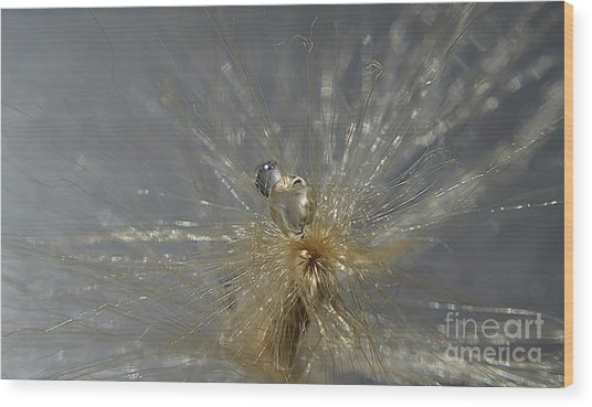 Silver Drops Wood Print