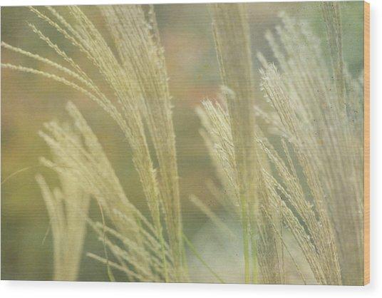 Silver Grass Wood Print