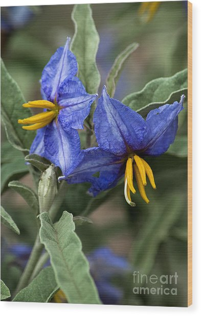 Wood Print featuring the photograph Silver Leaf Blooms by Mae Wertz