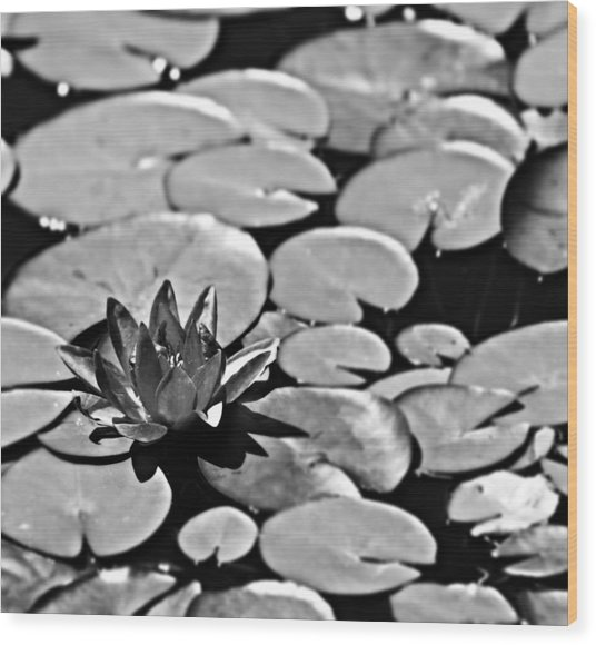 Silver Waterlily Wood Print