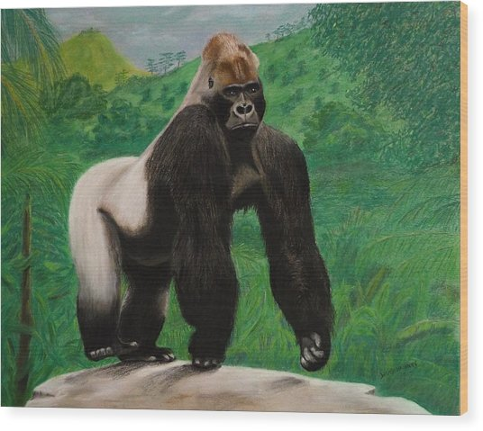 Silverback Gorilla Wood Print by David Hawkes