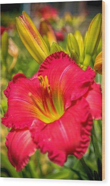 Simple Lily Wood Print