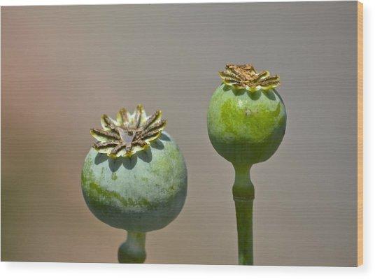 Simple Simon Wood Print by Marjorie Tietjen