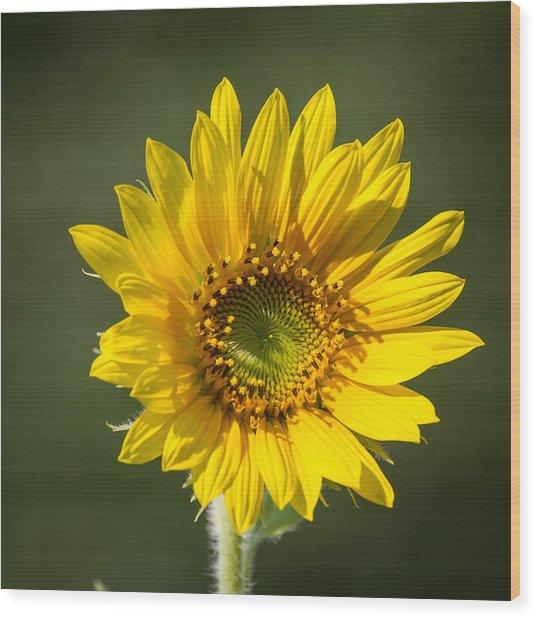 Simple Sunflower Wood Print
