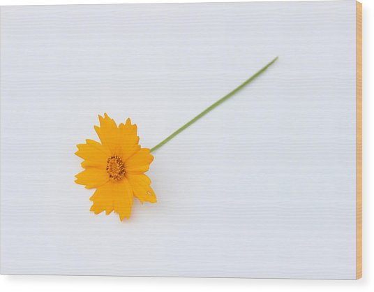 Wood Print featuring the photograph Simplicity by Ben Shields